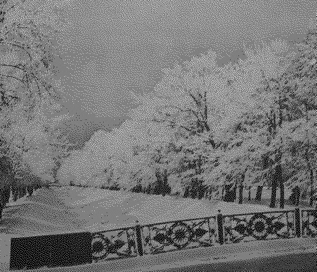 Лебяжья канавка зимой