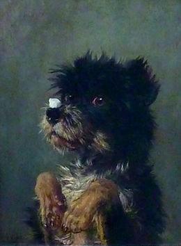 Собака с кусочком сахара на носу