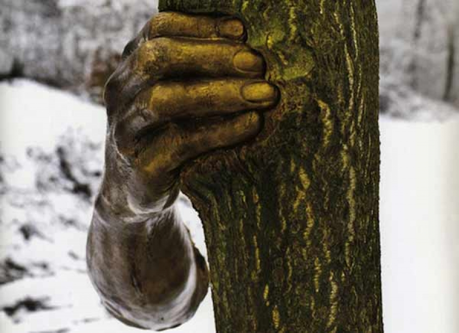 Рука и дерево