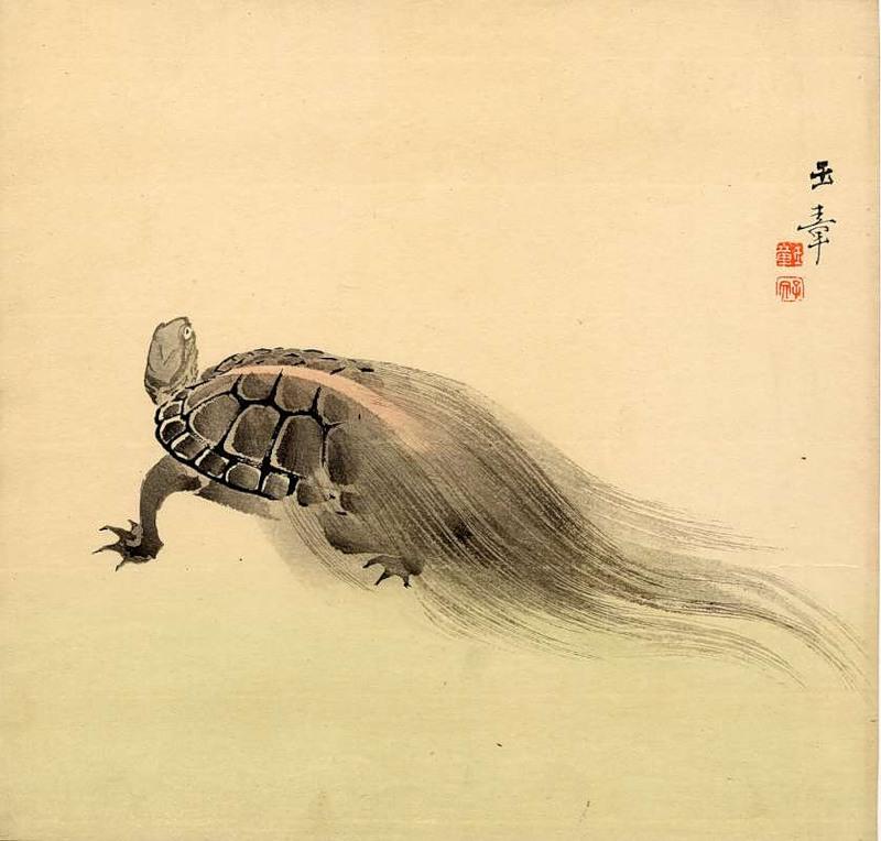 Черепаха с хвостом из водорослей