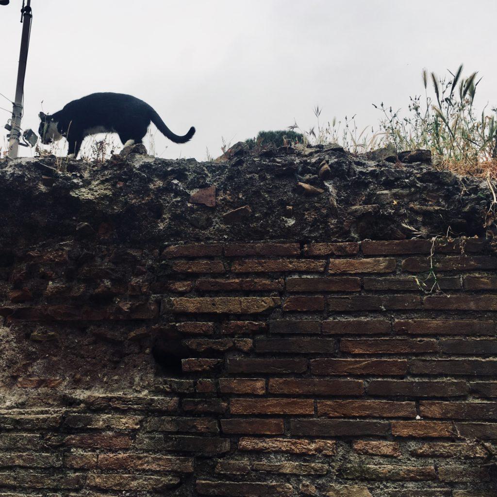 Приют для кошек «Gatti di Roma»