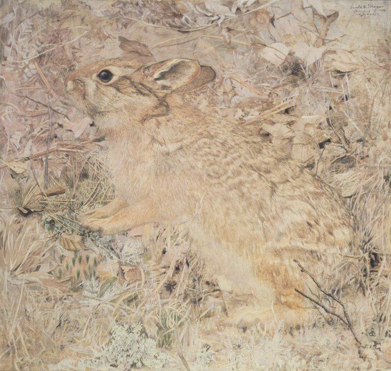 Кролик в сухой траве