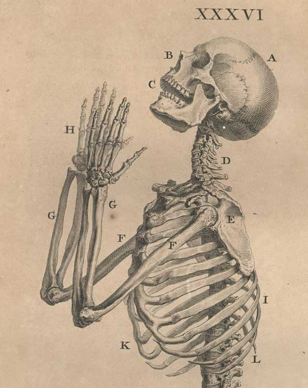 врач / преподаватель анатомии и хирургии / художник Уильям ЧЕСЕЛДЕН (1688-1752) / «Остеография, или анатомия костей»