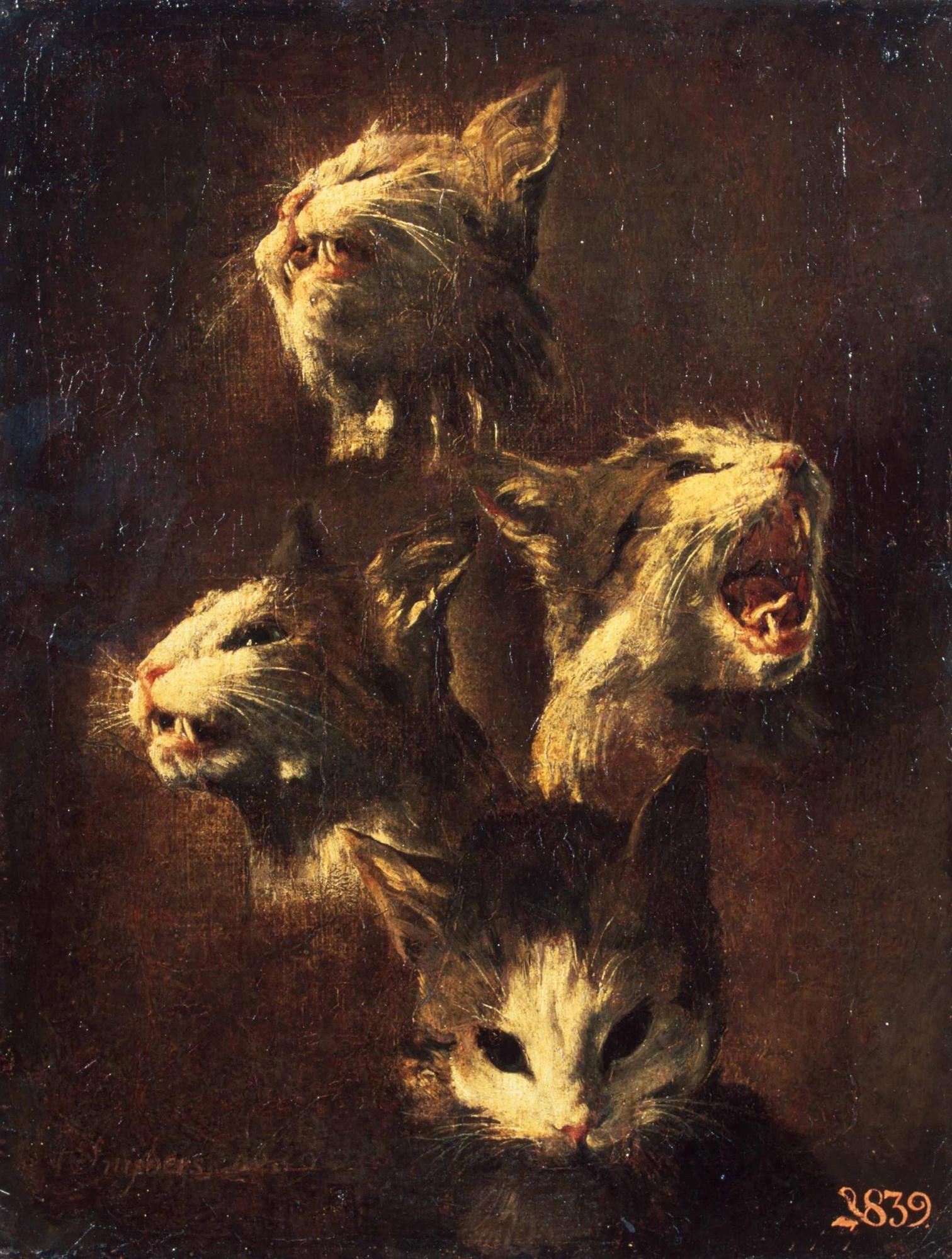 Франс Снейдерс / «Этюды головы кошки» / 1609